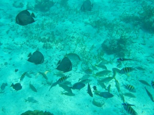 Here are some of the smaller fish that we saw.
