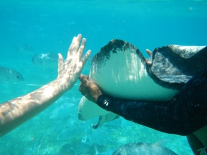 Blake, our guide, let me touch one of the rays.