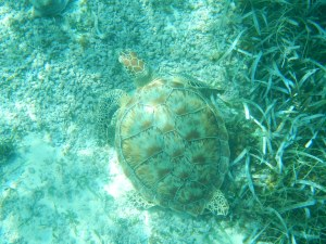 Here's a beautiful turtle that we spotted. He was huge!