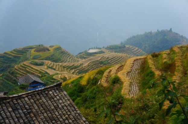 Rice Terraces