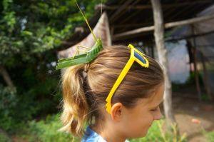Emma's banana leaf grasshopper.