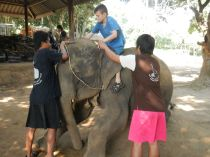 Getting up on my elephant