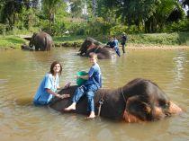 Elephant Park Washing