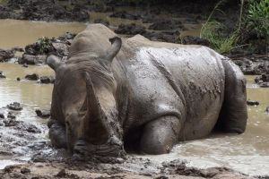 The sheer size of this Rhino would make just about anyone feel powerless next to him.