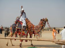 Dressing up your camel