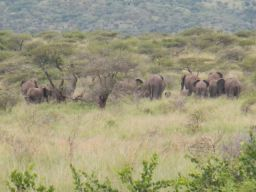 the herd of Elephant