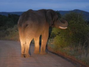 Stinky Elephant