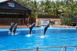 Dolphins at uShaka Marine World