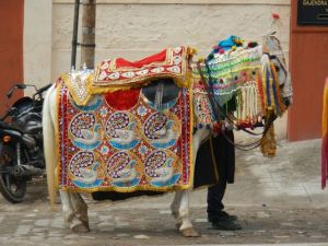 One well dressed pony