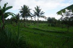 The Yogyakarta countryside