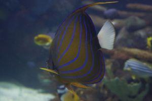 Beautiful fish swimming by.