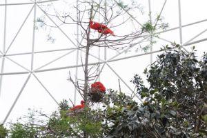 Bright red birds!
