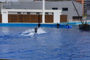 A trainer riding her dolphin to the edge of the pool.
